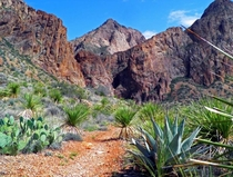 Hiking Trail of Big Bend National Park Texas