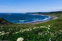 Hill of wild flowers leading to the beautiful southern Oregon coast - Cape Blanco Oregon