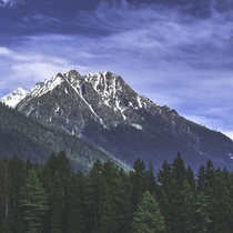 Himalayan pine forest and snow-capped peaks in Kashmir