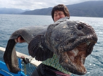 Hirasaka Hiroshi poses with the massive wolffish caught off the coast of the Japanese island of Hokkaido  x