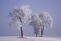 Hoarfrost covered trees during sunrise Southern Germany