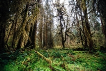 Hoh Rainforest Olympic National Park WA