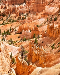 Hoodoos in Bryce Canyon Utah