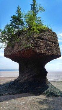 Hopewell Rocks formation at low tide in the Bay of Fundy