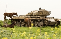 Horses graze near an abandoned Israeli tank in the Golan Heights on March