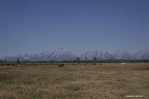 Horses in front of the insanely majestic and rugged Tetons