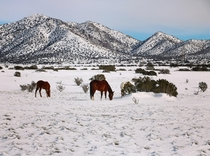 Horses in NM desert