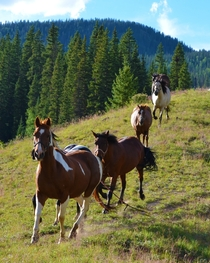 Horses running near Platoro Colorado