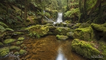 Horseshoe Falls and the enchanted forest of the Mt Field National Park in Tasmania Australia