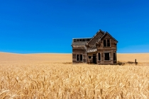 House in the middle of a wheat field  Photography by Jeff Edes