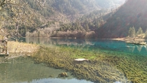 How about another A forest preserved in glass Colorful Lake JiuZhai Valley China