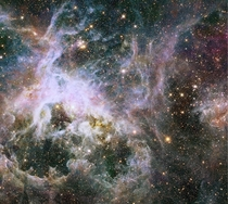 Hubbles picture of the Tarantula Nebula and its approximately  stars