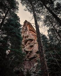 Huge Ponderosa trees and rock formations in Florence Mountain Park Colorado