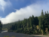 Humboldt Redwoods State Park as a Morning Fog Lifts OC - RawNo filter  x