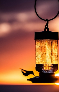 Hummingbird at Sunset