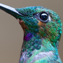 Hummingbird by Chris Morgan