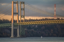 Humpback whale spouting below the Tacoma Narrows Bridge