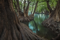 Hundreds of old cypresses guard the perimeter of Lake Camcuaro and its turquoise-colored crystal clear water Javier Eduardo Alvarez writes of this small Mexican lake