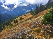 Hurricane Ridge hike overlooking the Olympic National Forest in Washington State