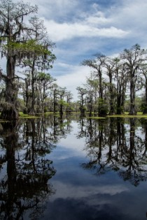 I always thought of bayous as sort of a myth until I came here Caddo Lake Texas