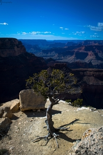 I am Groot Grand Canyon NP OC