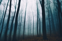 I am lost in the foggy woods of my hometown in German Odenwald