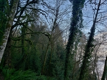 I beautiful day for walking the trails of Fyre Park Northwest Olympia WA And had to take some pictures  x