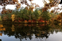 I captured this shot during a peaceful fall morning at a pond last year in Nova Scotia Canada  x