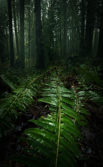 I could wander this forest forever So relaxing and peaceful Golden Ears Provincial Park BC
