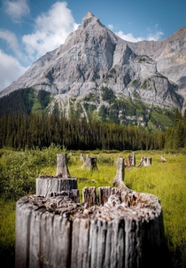 I dont usually name my photos but I think im gonna call this one stumped Alberta Canada