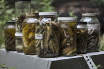 I Found Hundreds of Jars of Specimens Inside an Abandoned Research Facility in Ontario