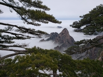 I found it almost too perfect how well the trees framed the scene Snowy view from the top of Huangshan Yellow Mountain Anhui Province China