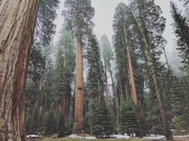 I found the most beautiful place- Sequoia National Forest