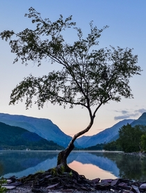 I got up at am to take the lone tree at sunrise Llyn Padarn North Wales