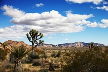 I Hear You Guys Like Joshua Tree National Park