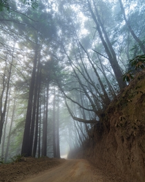 I love a good foggy forest Usal Beach California  kathryn_dyer