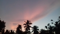 I love how the coconut trees look against the pink background here no editing  - kerala india