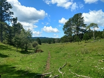 I love the area where I live - Old Baldy Trail in the Black Hills of South Dakota