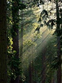 I love the warmth of sun rays while smelling the scent of lovely mammoth trees