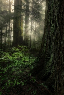 I love to wander around the rainy and misty forests near Vancouver Were fortunate that there are still pockets of old growth left here
