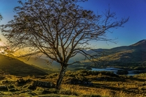 I made this photo of a tree in Killarney Nationalpark during sunset on my roadtrip through Ireland last year Its such a beautiful country