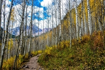 I passed through this glorious forest while hiking the Maroon Bells in Colorado