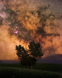 I photographed the milky way behind this tree using a telephoto lens and star tracker at mm in Grasslands National Park Canada