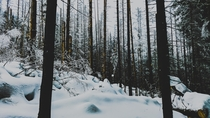 I really like forests but this one was quite dark and creepy I know that its only some snow and trees yet it got me at the time of capturing the photo On the way to Morskie Oko Lake Tatra Mountains