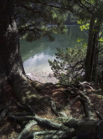 I really like photographing trees and exposed tree roots Slovakia Poprad Lake