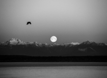 I saw this beautiful moonset over the Olympic Mountains from Seattle