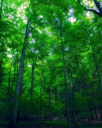 I snapped this verdant scene in Saugatuck Dunes State Park near Saugatuck Michigan