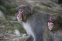 I took a picture of monkeys in Japan