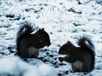 I took a picture of Some Squirrels in the snow X-Post from rITAP x