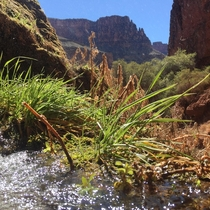 I took this photo at Ribbon Falls in the Grand Canyon